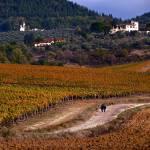"""Tuscan Dirt Road"" by raetucker"