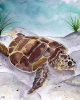 sea turtle portrait