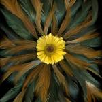 """December Daisy 3"" by LindaCavaney"