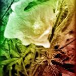 """Floral Spectrum"" by MissDawn"
