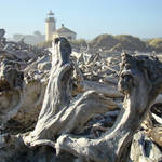 Lighthouse Bandon Oregon prints Coastal Driftwood