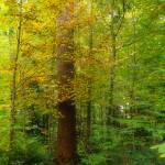 """Enchanted wood"" by MatteoCozzi"