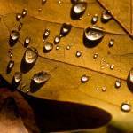 """Raindrops on Leaf"" by singularscenes"
