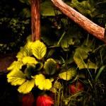 """Rustic Garden"" by singularscenes"