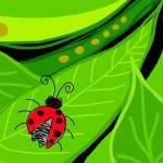 """""""Lady Bug"""" by rudolf"""