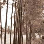 """Bamboo garden"" by oceansong04"