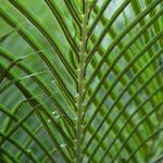 """Palm Leaf"" by Alina8"