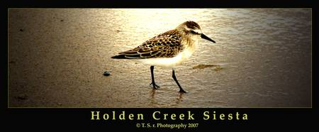 Holden Creek Siesta