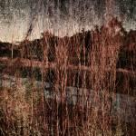 """Bare Limbs"" by SkipNall"