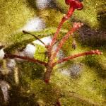 """""""Flower Bud"""" by SkipNall"""
