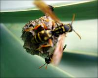 Busy bee'in wasps