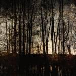 """""""Swamp at Night"""" by SkipNall"""