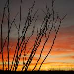 """""""Big Bend Sunset 1"""" by Vince-McCall-Photography"""