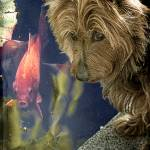 """""""Scottie and Goldie"""" by ChrisLord"""