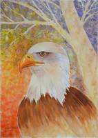 Bald eagle, watercolor