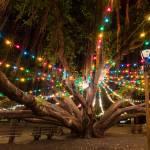 """""""Lahaina Banyan Tree at Christmas"""" by RobDeCamp"""
