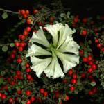 """""""Petunia Wreath"""" by LindaCavaney"""