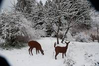 Two Metal Deer Grazing in Winter