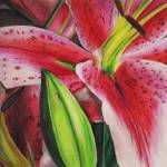"""""""Pink Lily"""" by LauraDunce"""