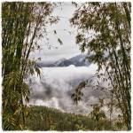 """""""Bamboo Over Mountains"""" by SkipNall"""