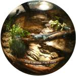 """NYC CENTRAL PARK ZOO Lizard Fisheye view"" by apanoramicview"