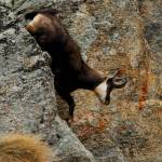 """Discesa acrobatica!"" by davidevighetti"