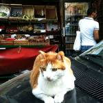 """Cat at a Parisian Market"" by VictoriaHawkins"