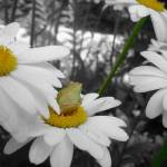 """""""DaisyField"""" by LeasXposures"""