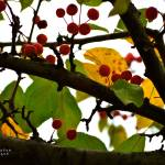 """Autumn Tell"" by HarryLipson"