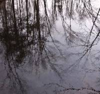 Brimfeld Reflection ll