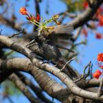 """LittleBird"" by LeasXposures"