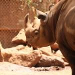 """Rhino"" by LeasXposures"
