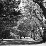 """Arboreal Avenue"" by Autofocused"