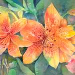 """Hardy Lilies"" by awagner"