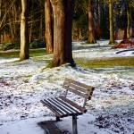 """Winter Park"" by raetucker"