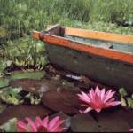 """Colombian Boat and Flowers"" by Lawrence"