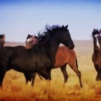 Black Horse by Jim Westin