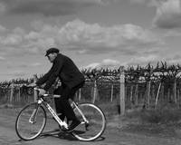 Vineyard Cyclist