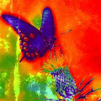 Rainbow Butterfly Art Prints & Posters by Mechele .