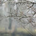 """""""Tiny Rain Drops"""" by KimberImages"""