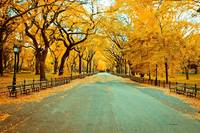 Fall New York City