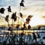 """Torbiere #4 (The wind in the reeds)"" by and979"