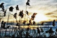 Torbiere #4 (The wind in the reeds)