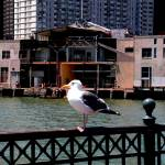 """Seagull at Fisherman"
