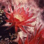 """Red Cereus 2"" by JoanneNetland"
