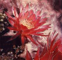 Red Cereus 2