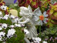 Provincetown Flower Fairy