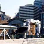 """San Francisco Seagull"" by raetucker"