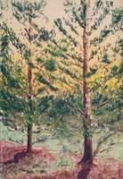 Pines at Sunset2
