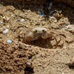 """""""Crab"""" by westonsorensen"""